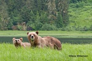 Mom & Cub in the Grass