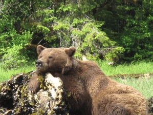 Jacqueline, Grizzly Ambassador - Momma Grizzly resting