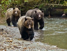 Three Bears Approach 20080925_Jul 18 2010.jpeg